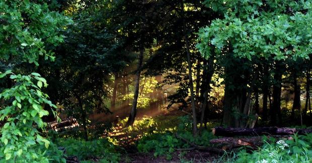 Die Waldaufforstung von Dr. Schünemann nördlich von Dresden