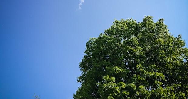 Wälder spielen für den globalen Klimaschutz eine wesentliche Rolle